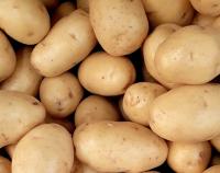 potato-EasyBazar-Holland-big