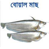 Boal-fish-easybazar-bangladeshi-market-france-free-delivery