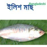 ilish-fish-easybazar-bangladeshi-market-france-free-delivery