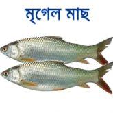 mrigel-fish-easybazar-bangladeshi-market-france-free-delivery